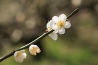 spring_9s