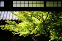 zen_2